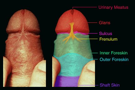 swelling of area around penis